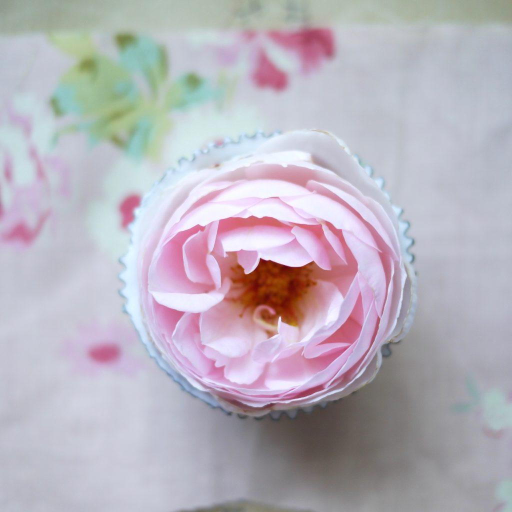 un petit cadeau rose sera glissé dans votre commande.